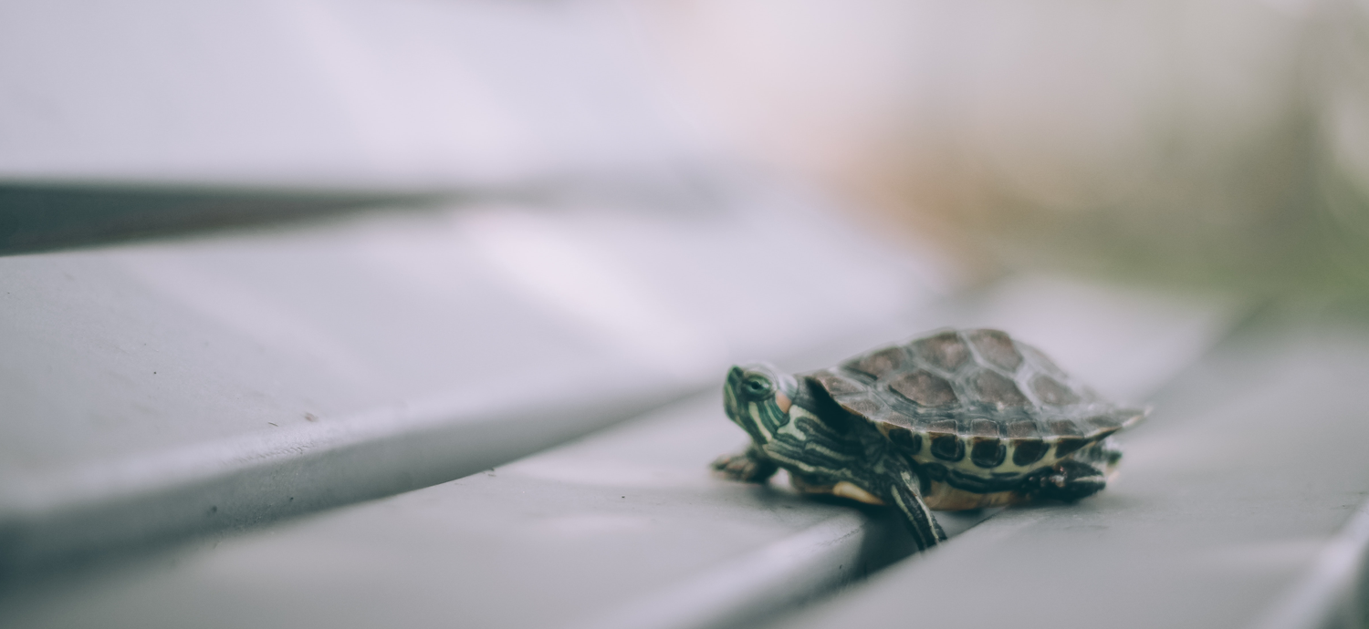 No Time To Be A Tortoise: Credit Unions Are Running Out Of Time To Catch Up